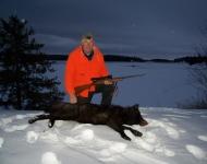wolf NDdeer proam babies 168